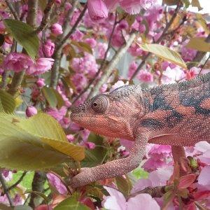 Pretty Pixie!