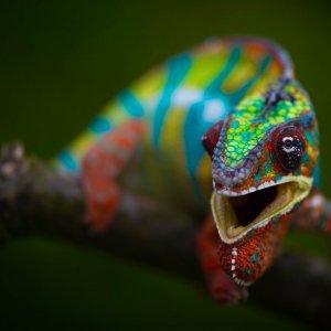 Rainbow buddy