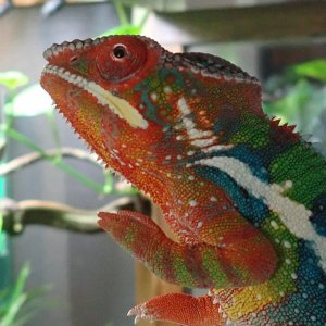 6 Month Hatch Day Rainbow - Raistlin...