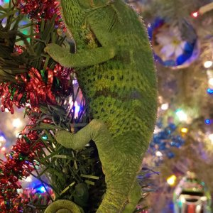Have yourself a scaly little Christmas