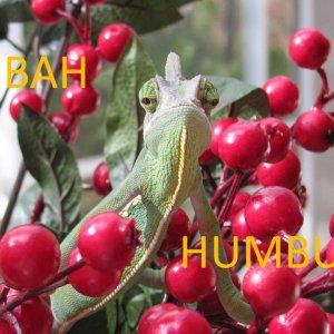 Zaphod at the Holidays