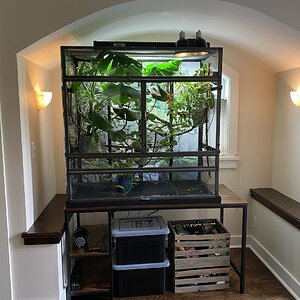 EnclosureEnclosure Dragon Strand 4 Foot Atrium Clear Sides