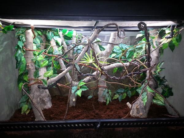 Is repti glo 5 0 enough for 36 high terrarium live plants - Como construir un terrario ...