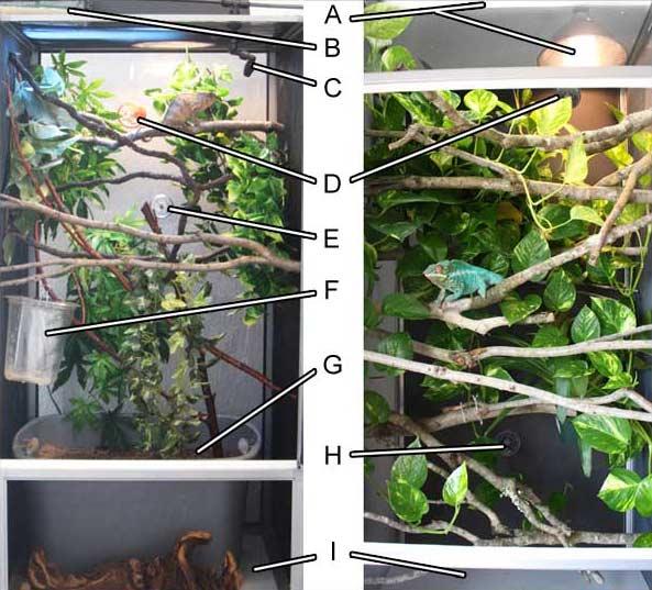 Chameleon Enclosures Chameleon Forums