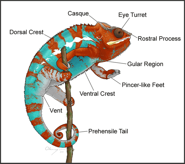 Chameleon Diagram