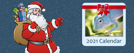 2021 Chameleon Calendar